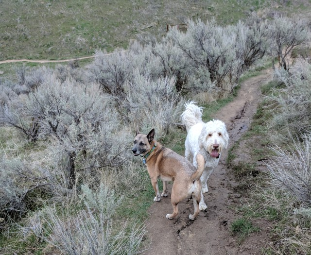Trail Dogs at Hull's Gulch Trail