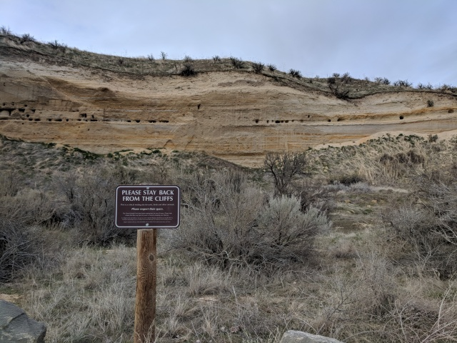 Restoration of vegetation and preserving cliffs at Hull's Gulch Reserve