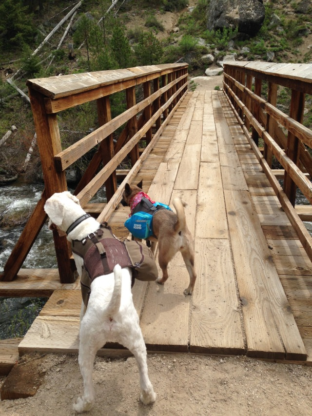 backpacking dogs bridge Crooked River Trail Boise National Forest