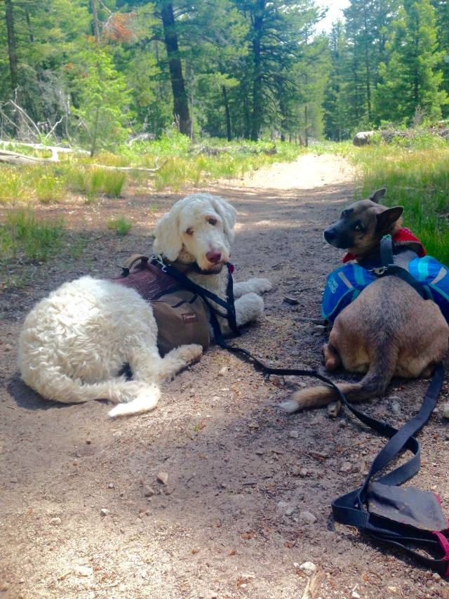 backpacking hiking dogs gear alice toxaway trail loop leashes