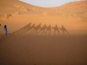 riding camels in the Sahara